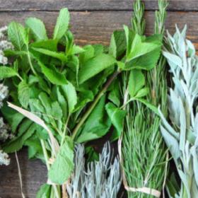 herbolario vidanatural hierbas